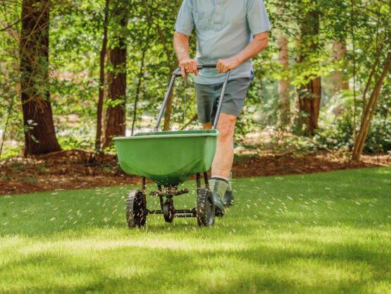lawn seeding beaverton or