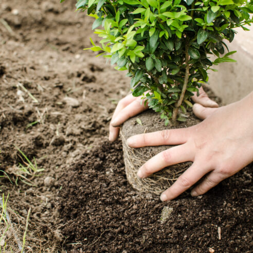 tree planting beaverton or