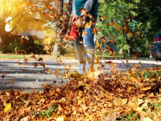 seasonal yard clean up beaverton or