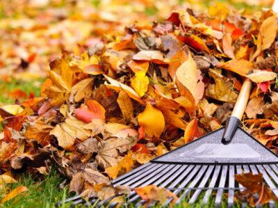 fall yard clean up beaverton or
